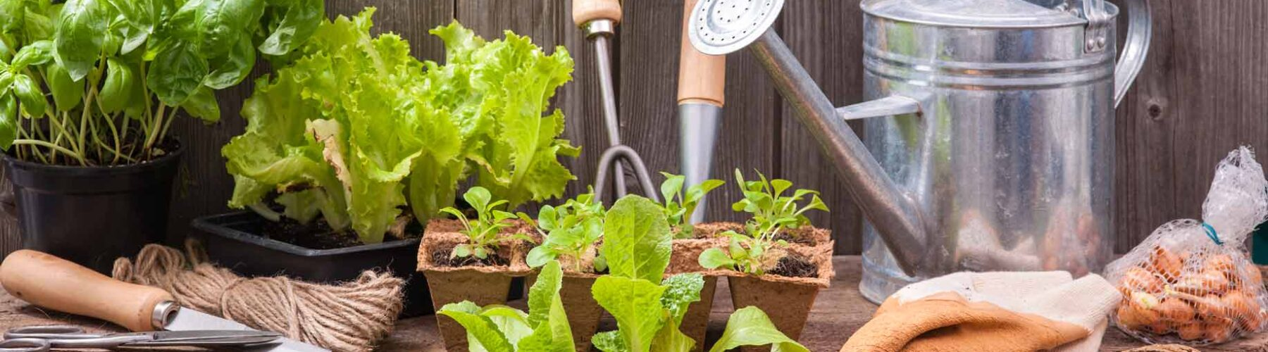 How to Start Your Garden: 4 Best Tips from Lawn and Landscape Experts