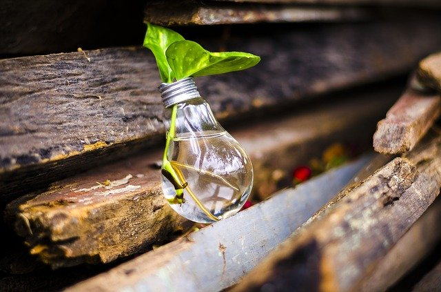 Bulb, Light, Recycle, Water, Green