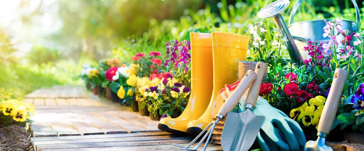 5 Sustainable Garden Tips You Should Know