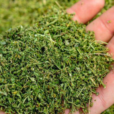 Hemp Help: What Is Biomass in Hemp?